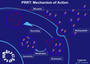 PRRT mechanism of action